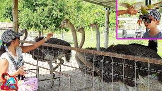 น้องบีม | นกกระจอกเทศจิกมือแม่บี เที่ยวเพชรบุรี มาลัยฟาร์ม ชะอำ