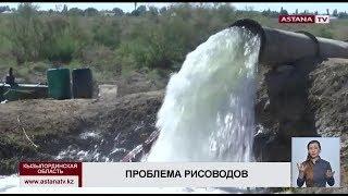 Рисоводы Кызылординской области рискуют остаться без поливной воды