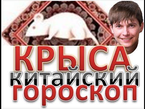 Ноябрь гороскоп друидов