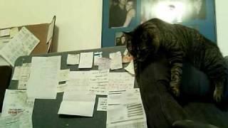 Here Kitty Kitty [Thumbelina vs Chair]