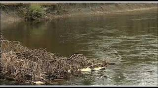 Where Trout Hold | How To Find Trout in A River