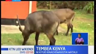 Tembea Kenya:Kituo cha Hallar park kinachovutia watalii wengi Pwani