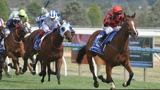 preview picture of video '2014 BTC Ballarat Cup _ Mujadale'