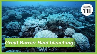 Great Barrier Reef suffers third major bleaching event in five years