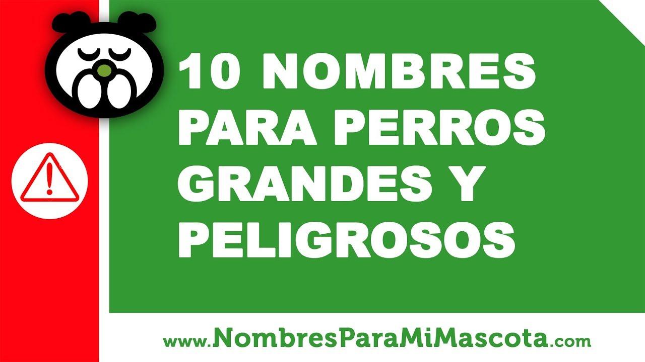 10 nombres para perros grandes y peligrosos - www.nombresparamimascota.com