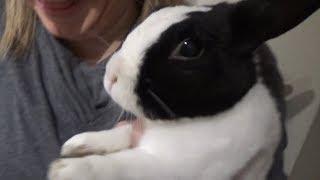 Смотреть онлайн Как реагирует кролик на вкус лимона
