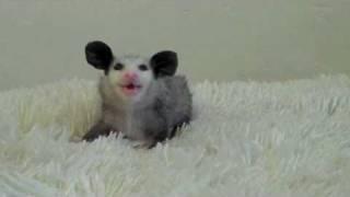 Маленький жующий Микки Маус