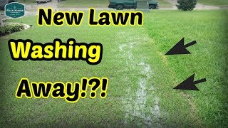 Too Much RAIN For Newly Seeded Lawn!