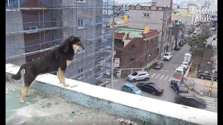 Dog Afraid Of Walking Outside Lives On The Rooftop | Kritter Klub