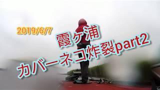 吉田尚晃 撮影 霞ヶ浦カバーネコ炸裂part2