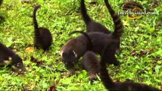 The Best Costa Rica Hotels Resorts, Videos, Vacation Travel Packages, Tours