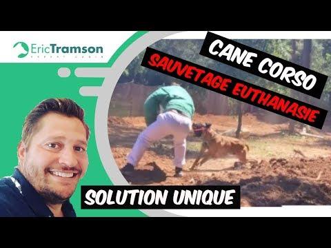 SAUVETAGE EUTHANASIE/ CANE CORSO/eric TRAMSON/EDUCATEUR CANIN AGGRESIF DOGS