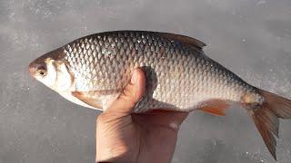 Отчеты о рыбалке в брейтово 2020