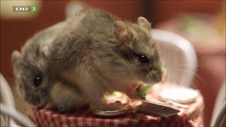 Nuttet Om Natten »In the Restaurant«