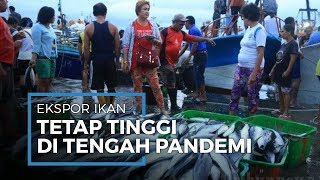 Ekspor Ikan di Jawa Tengah Meningkat, Maskipun di Tengah Pandemi Corona