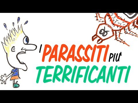 Trichomonad parassita intracellulare