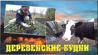 ДЕРЕВЕНСКИЕ БУДНИ  Выпустили коров  Посадили клубнику  Выгрузил прицеп / Семья в деревне
