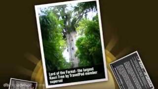 preview picture of video 'Giant Kauri Trees and Hot pools Superval's photos around Waiwera, New Zealand (giant tree nz)'