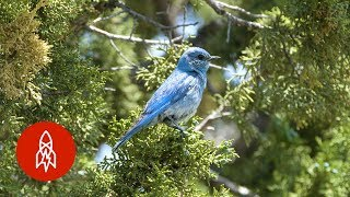 The Birdman Of Idaho Has Built Homes For Over 40,000 Bluebirds