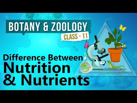 mp4 Nutrition Vs Nutrient, download Nutrition Vs Nutrient video klip Nutrition Vs Nutrient