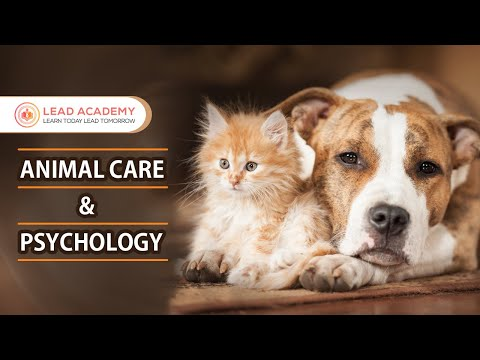 Animal Care | Online Course | Lead Academy | Animal Psychology