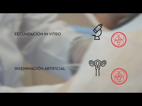 Diferencias entre fecundación in vitro e inseminación artificial