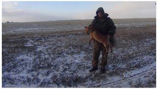 Смотреть онлайн Зимняя охота на лису с подхода