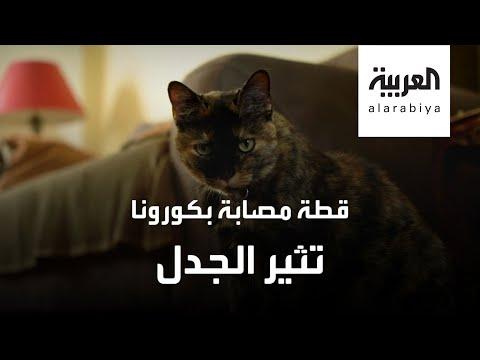 العرب اليوم - شاهد: قطة تصاب بفيروس