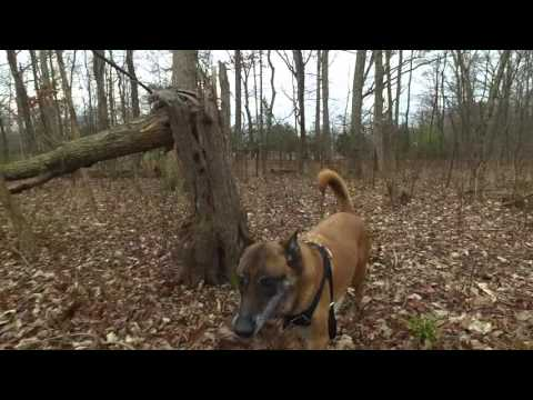 Deer Recovery Training | Tracking Training In Northern Virginia | Dog Tracking