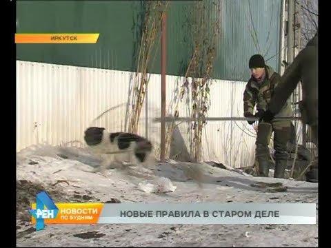 Отлов бездомных животных в Иркутске будут вести по-новому