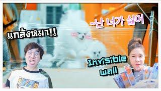 """แกล้งหมาด้วย กำแพงล่องหน!! """"Invisible Wall"""" 🐶🤦🏼♀️"""
