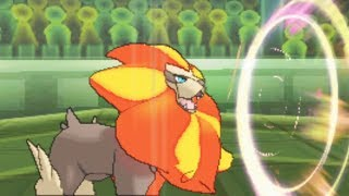 Pyroar  - (Pokémon) - DONT MAKE PYROAR ANGRY | Pokemon Sun & Moon Wifi Battle