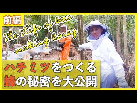, title : '【ハチについてよくわかる前編】はちみつを作る過程を一挙公開!The life of bees making honey!
