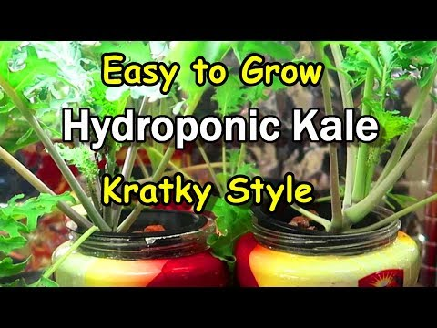 Aeration vs No Aeration - Hydroponic Peppers w/Time Lapse