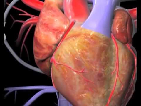 Hipertenzija i mijastenije gravis