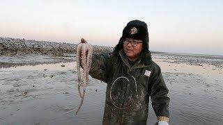 农人川子:今天发财了!赶海抓到这么大一只八爪鱼,再冷也值得!