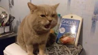 Кот говорит жрать не буду. Разговаривает кот не матерится
