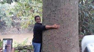 Tanam Pohon Salak dan Pamer Batu Akik hingga Peluk Pohon Besar, Momen Anies di Hari Ciliwung Ke-7