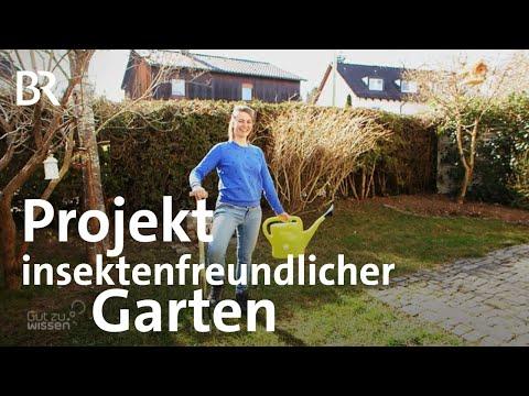 Wie sieht ein insektenfreundlicher Garten aus? | Gut zu wissen | BR | Tutorial