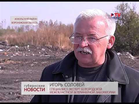 В Хохольском районе обнаружена несанкционированная свалка площадью 1, 4 га
