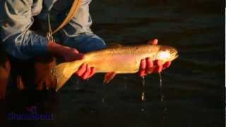 Steamboat - Fly Fishing
