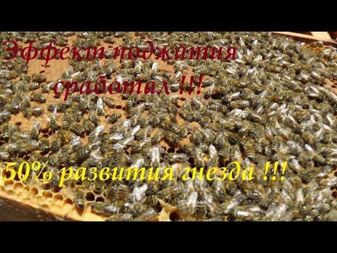Весеннее расширение пчелиной колонии методом Блинова