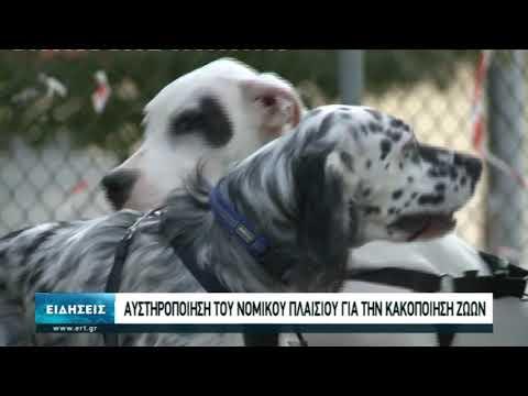 Αυστηρές ποινές για την κακοποίηση των ζώων ζητά ο Άρειος Πάγος | 19/10/20 | ΕΡΤ