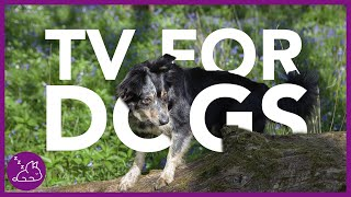 TV For Dogs: 2 Hours of Entertaining Virtual Dog Walking! (NEW)