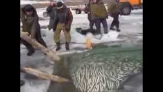 Смотреть онлайн Как легко вытащить сеть с рыбой из реки