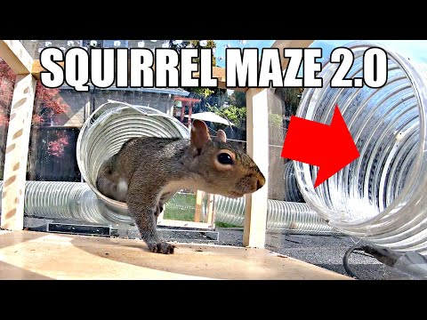 This Guy Made the Ultimate Squirrel Maze in His Backyard