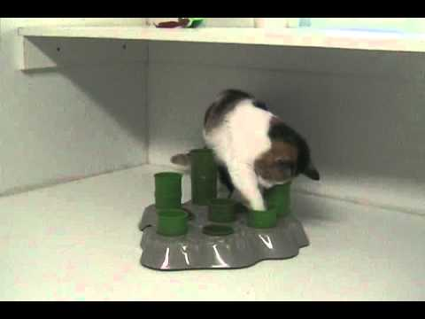 "Aikiou Stimulo Activity Food Center for Cats  - Gray/Green (11.5"" x 11"" x 2"") Video"