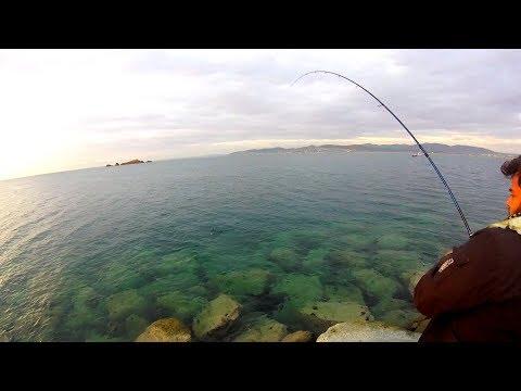 Kystfiskeri efter tun