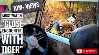 "Must watch ""close encounter with tiger T6 cubs (bittu and srinivas)"", karhandla 1-1-16"