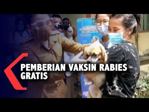 pemberian vaksin rabies gratis untuk anjing dan kucing di singkawang